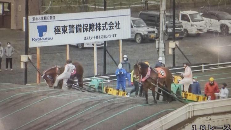 ばんえい競馬で馬を蹴るシーン