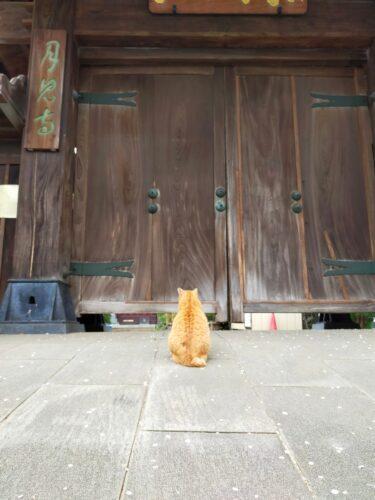 【動画】教皇に破門された王が許しを乞うていた 門の前の猫が話題に