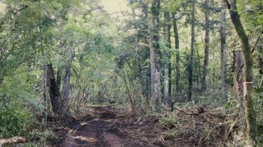 竹村修の顔,SNS,住所,仕事は?山梨の天然記念物の森林を破壊